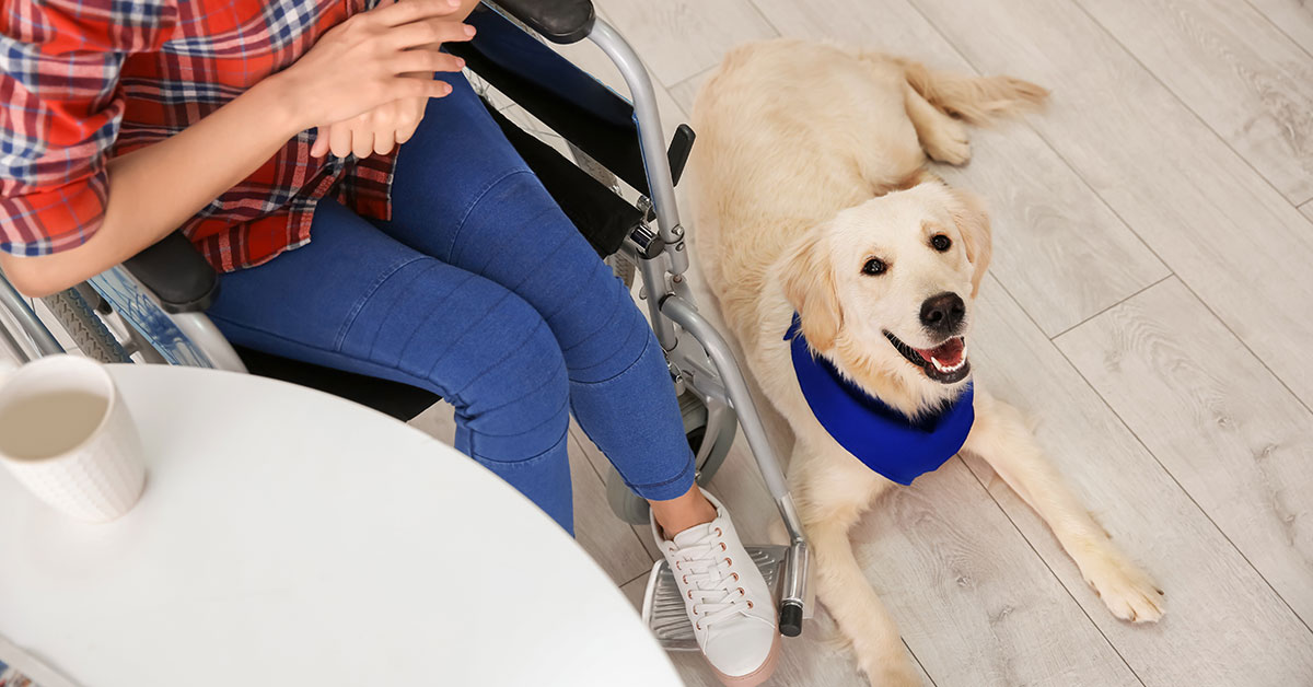 An Overview of Assistance Dogs for People with Disabilities